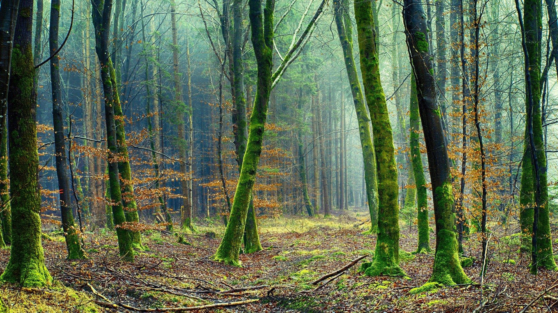 Bäume und Menschen